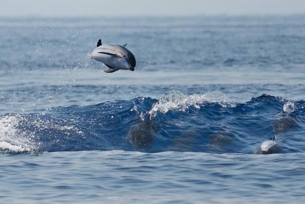 Dolfijnen kijken