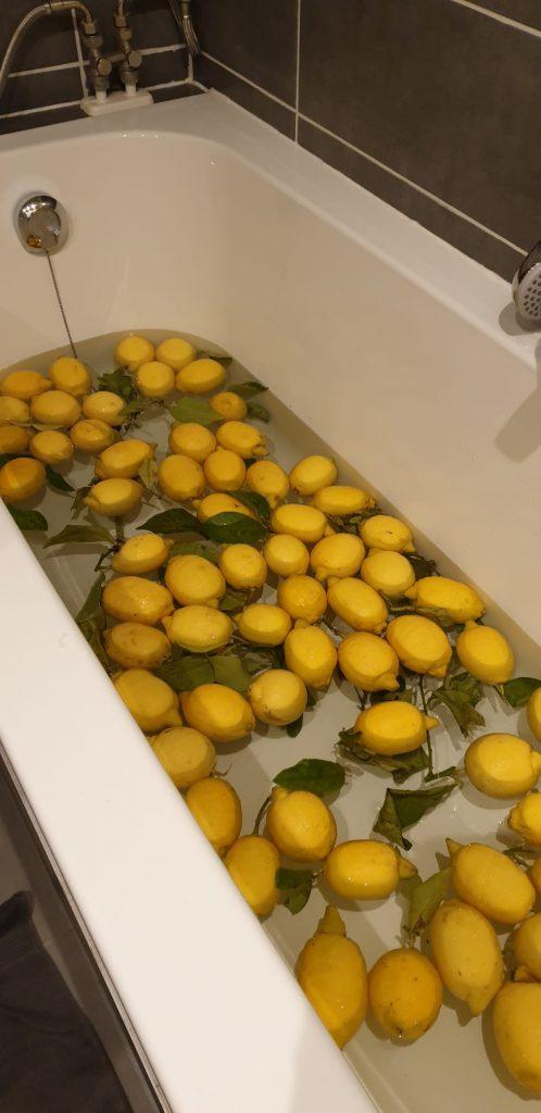 voorbereiding limoncello
